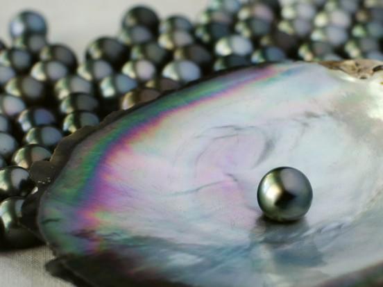 black-pearl-650x487